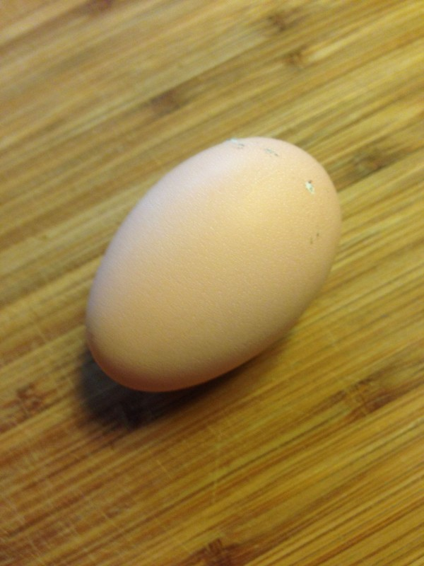 our-first-egg