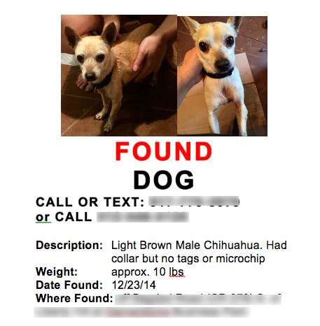 found-dog-image